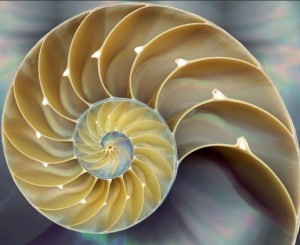 Fibonacci Plant Spiral
